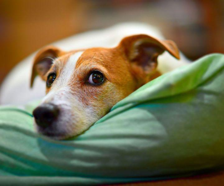 Pet Sitting Service Chipping Sodbury Yate Pet Sitting